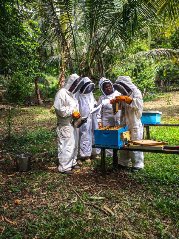 Pacific Islands beekeeping beekeepers barefoot college international women empower honey natural
