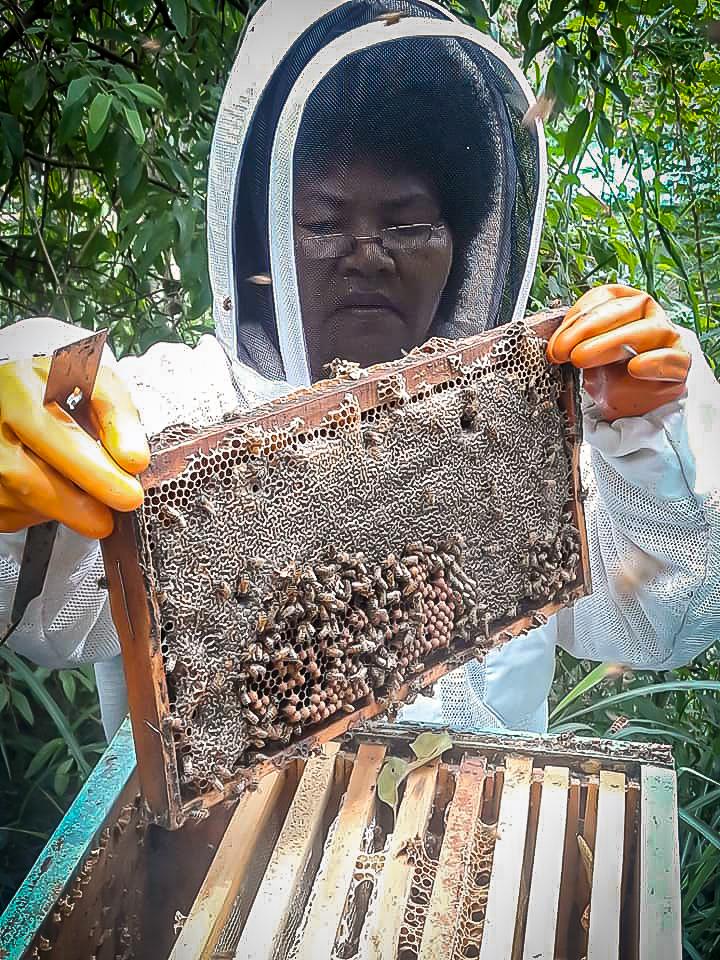 Pacific Islands beekeeping fiji siliva honey harvest women