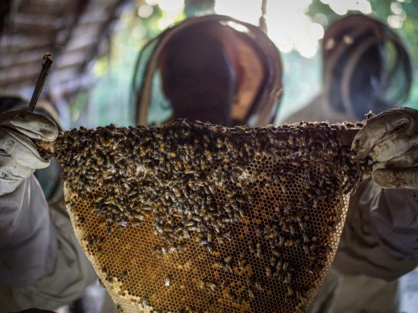 beekeeper woman barefoot college international honey